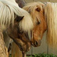 Charming Creek Farm Pony Tales