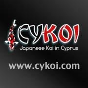 Cyprus Koi