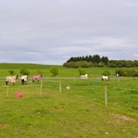 Massey University Equestrian Centre