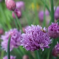 Wild Seed Holistic Health