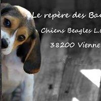 Chiens Beagles Lof Du Repère Des Bandits