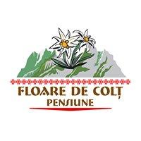 Floare de Colt    Pensiune