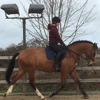 Bethan-May Equestrian at Upper Farm Henton