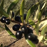 Terrace Hill Olive Oil Co. of Tucker Family Farms