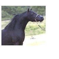 Wiltz Family Miniature Horses and Tack