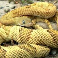 Reptile Island - Yorba Linda