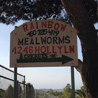 Rainbow Mealworms Bonsall
