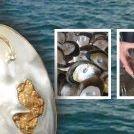 Blue Lagoon Pearls | Gemini Pearls & Black Pearls | Monkey Mia, Shark Bay