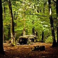 Forêt Du Mesnil