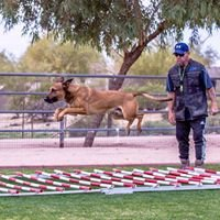 DESERT SKY K9 ALL BREED DOG TRAINING / BOARDING