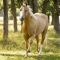 BlueRidge Equestrian