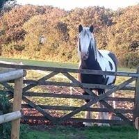 Broady Park Horses