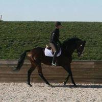 Desert Shadow Equestrian Center