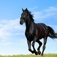 The Tack Shack Equestrian Supplies