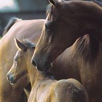 Durango Equine Veterinary Clinic