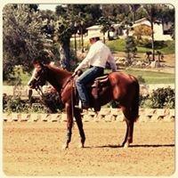 Stinemetze Performance Horses