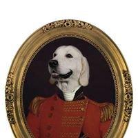 Hound Hall Luxury Dog Hotel, Shropshire
