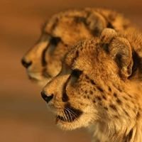 Talon Safaris