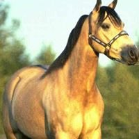 McCarron Equine Appraisals