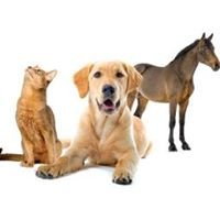 All Pets Veterinary Hospital & Equine Service