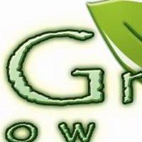 Go-Green Window Tint
