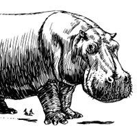 Hippopotame ヒポポタム