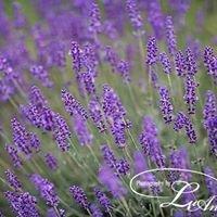 The Little Lavender Farm