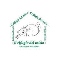 Il rifugio del micio gattile di Vigevano
