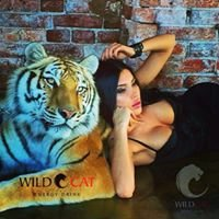 Wild Cat Energy HQ