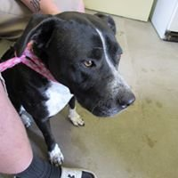 Mineral County Animal Shelter