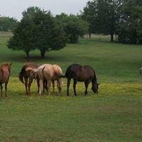 KAT Quarter Horses
