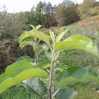 Pépinière d'arbres fruitiers Florent Augay