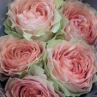 Henrikssons blomstergrossist