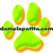 Centro Canino Damelapatita.com