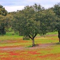 Conyegar, paseos guiados / Guided walks; Turismo Cultural Activo