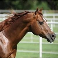 Jeff Capps Merada Equine