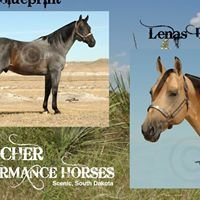 Whitcher Performance Horses
