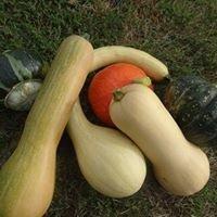 Légumes Bio de Maxence de Coignac