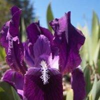 Les Senteurs du Quercy Iris