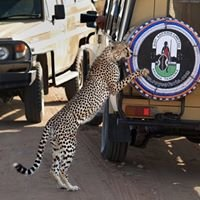 Roy Safaris