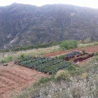 Las Torcas Alimentos ecológicos