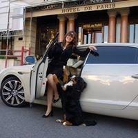 O.K. Dog Monte-Carlo