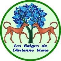 Les Galgos de l'Ardenne bleue