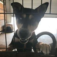 Pet Adoptions of Cuero