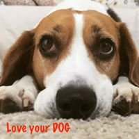 Love your Dog