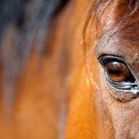 Centre Equestre Divonne Les Bains