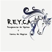 REYCA Recuperación de Equinos y Centro de adopción