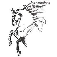 Les Crinières D'Orient - Spectacle Equestre