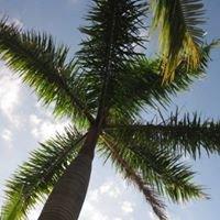 Tropics Lounge