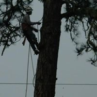 C.O.C. Hazardous Tree Removal Ect.